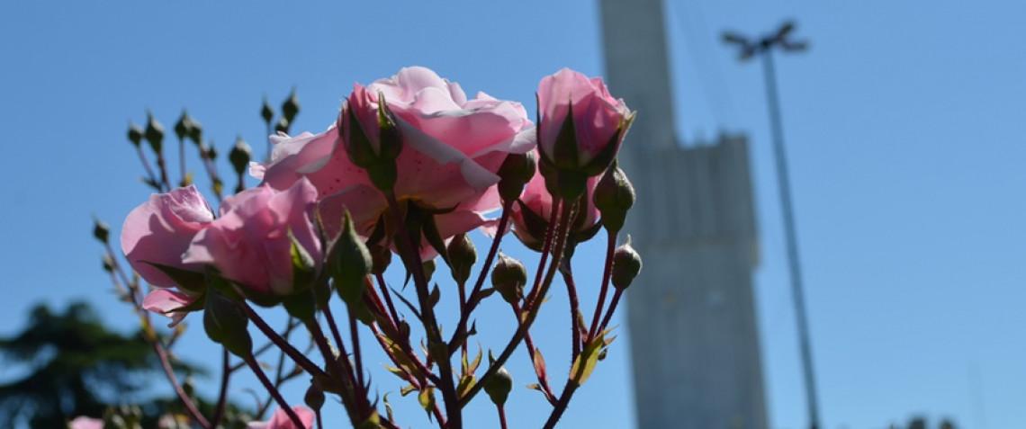Flores recortadas en la municipalidad